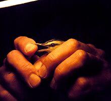 In Good Hands by Rachel Broten