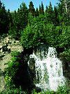 wilderness by schizomania