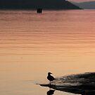 Seagull at dusk in the Marathon harbor by loralea