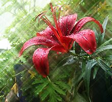 Wet Red Lilly by terrijoyce