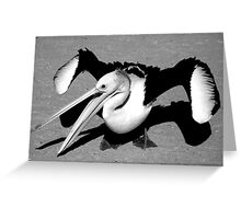 """Rogue Pelican"" Monkey Mia, Western Australia Greeting Card"