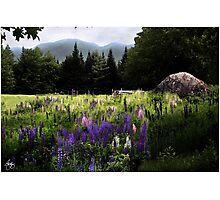 Lupine in the Shadow of Cannon Photographic Print