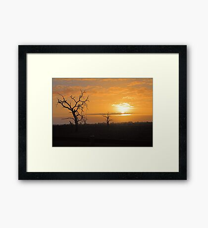 Farm Trees At Sunset  Framed Print