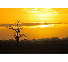 Farm Tree At Sunset  Photographic Print