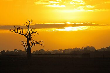 Farm Tree At Sunset  by EOS20