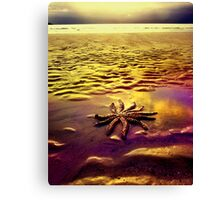 Washed Up Stars Canvas Print