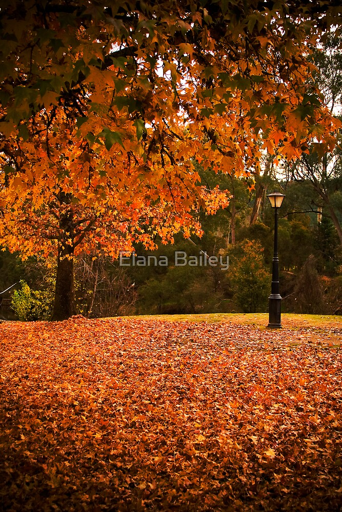 Beautiful Bright in Autumn by Elana Bailey