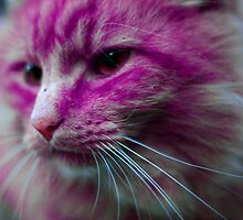 Pink Cat by Philip Werner