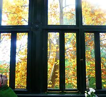 *Looking out at Autumn  - Daylesford, Vic, Australia* by EdsMum