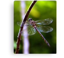 Dragonfly #4 Canvas Print