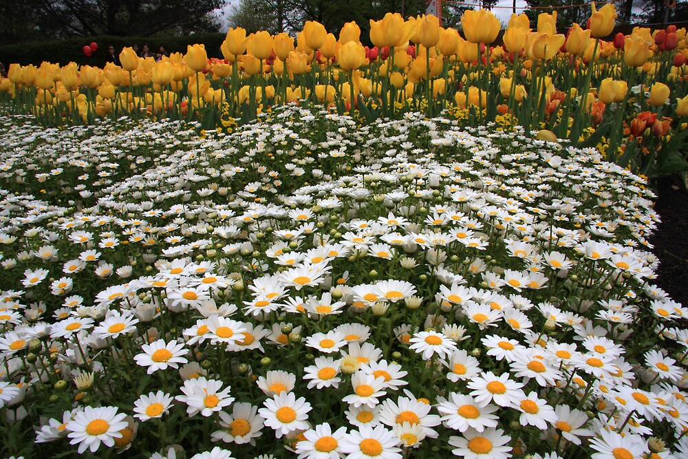 Mattress of Daisies and a Pillow of Tulips by Geoff Smith
