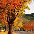 A tree lined street in Bright by Elana Bailey