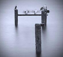 Edithburgh Shags by Darryl Leach