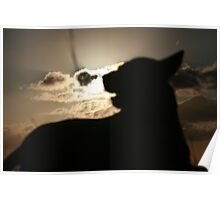 Silhouette Pooch Poster