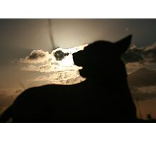 Silhouette Pooch Photographic Print
