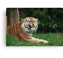 Fierce Feline Canvas Print