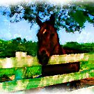 Horse Hello  by PJDesigns