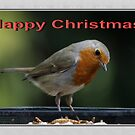 Christmas  Robin by AnnDixon