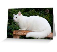 Casper Maxwell Snow Greeting Card