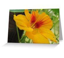 Leaf me alone! Greeting Card