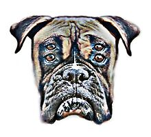 Four Eyes Boxer Dog by tsign703