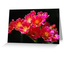 Lewisia Greeting Card