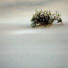 White Sand #2 by Anne  McGinn