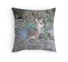 Damaraland Dik Dik Throw Pillow
