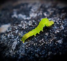 green inch worm 1 by Eric Maki