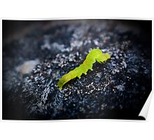 green inch worm 1 Poster
