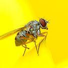 Fly in yellow by Paulo van Breugel