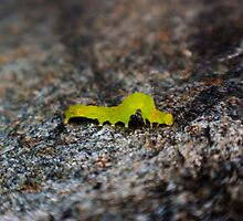 green inch worm 2 by Eric Maki