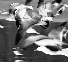 in flight by Carlos Restrepo