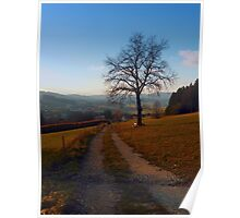 Tree, trail and indian summer evening | landscape photography Poster