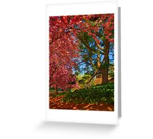 Cherry Blossoms in the Shade Greeting Card
