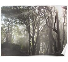 Nature's Rays Poster