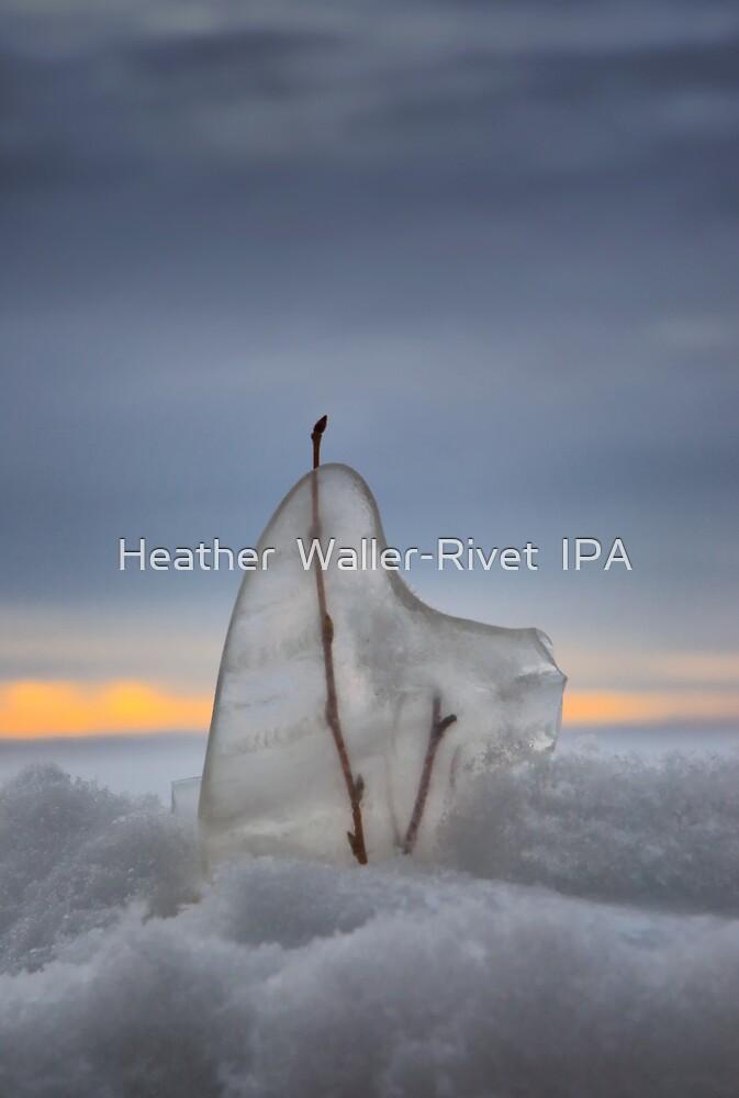 Winters Freeze by Heather  Waller-Rivet  IPA