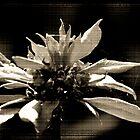 Old Flower by Jodie Bennett