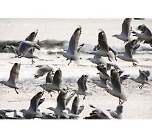 Birds! Photographic Print