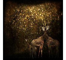 Pygmy Giraffes Photographic Print