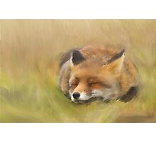 Just a Happy Foxy Photographic Print