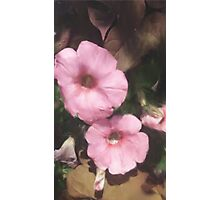 The Pink Flowers Photographic Print