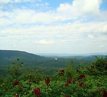 Small Piece of Cheeha State Park by Wanda Raines