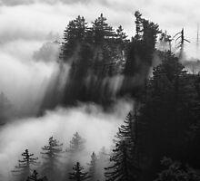 Palomar Mountain by Hugh Smith