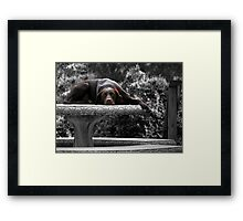 DOG DAYS Framed Print