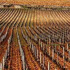 Vineyard vertical. by Victor Pugatschew