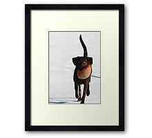 WIDE RETRIEVER Framed Print