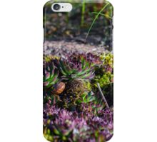 House In The Garden iPhone Case/Skin