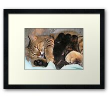 Mother Tabby Cat Suckling Four Newborn Kittens Framed Print