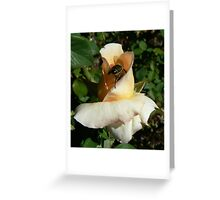 Dive in Greeting Card